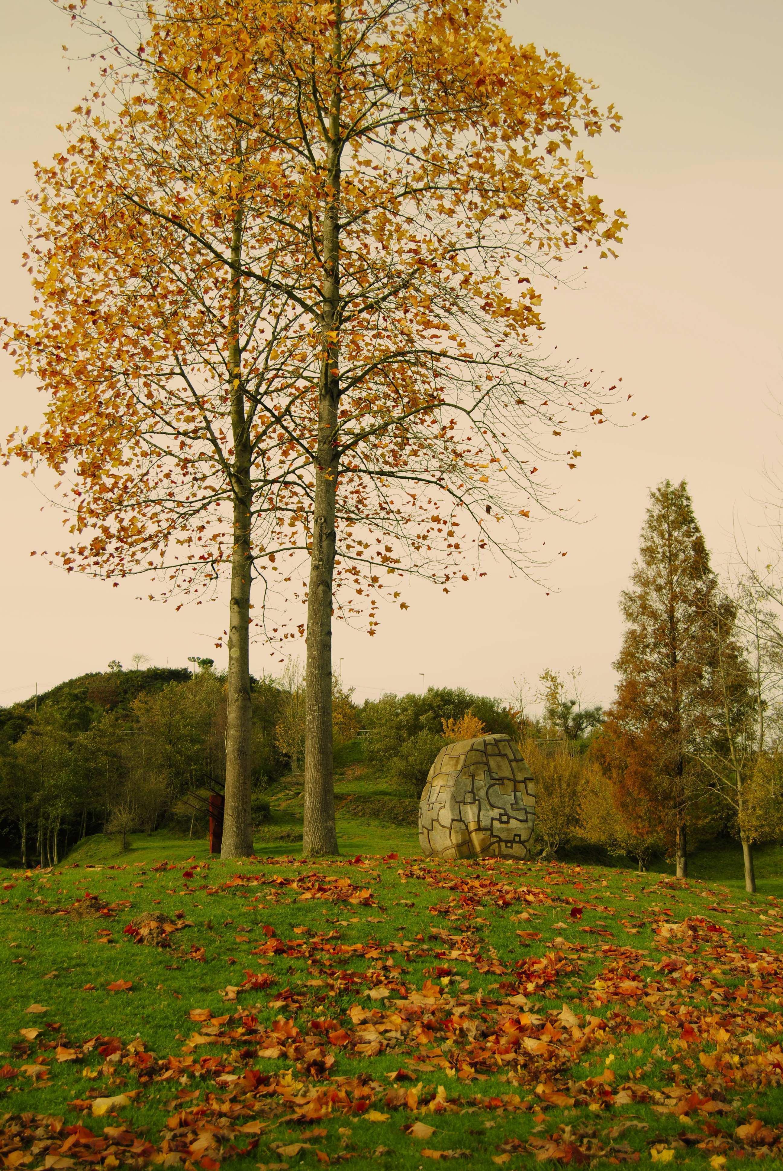Al final del camino de hojas