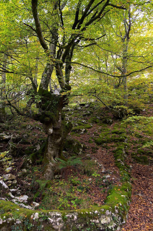 Bosques de otoño 1