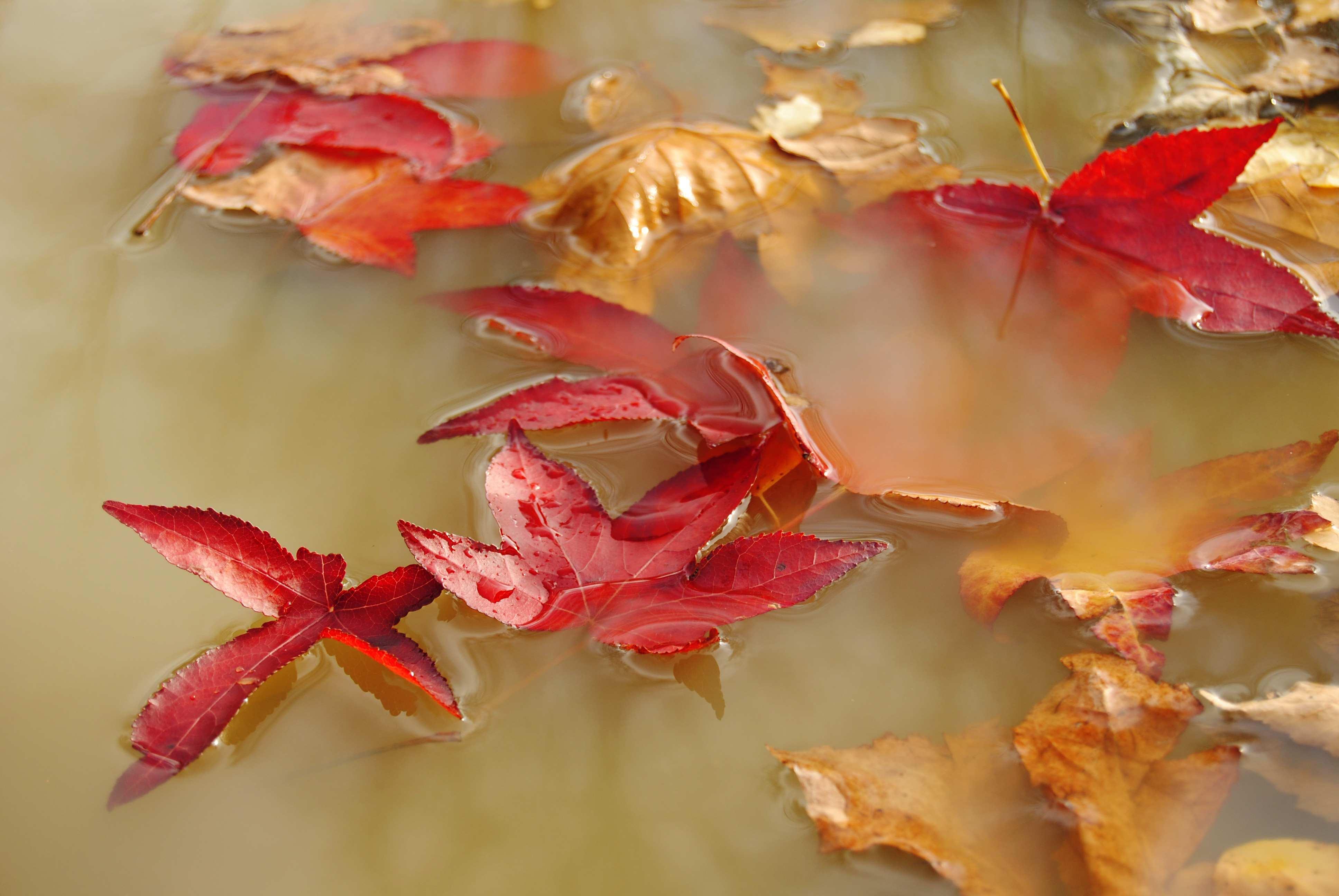 El fluir del otoño