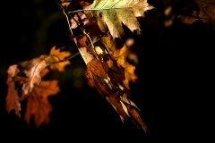 Amarillos y ocres al viento