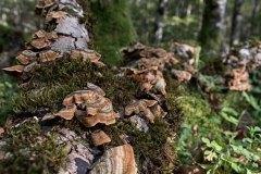 Bosques de otoño 2