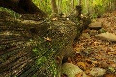 El Gran Árbol-Baztan