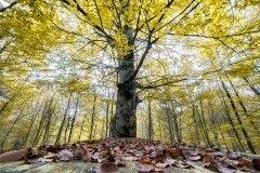 Mesa de hojas caducas