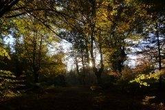 el bosque_2
