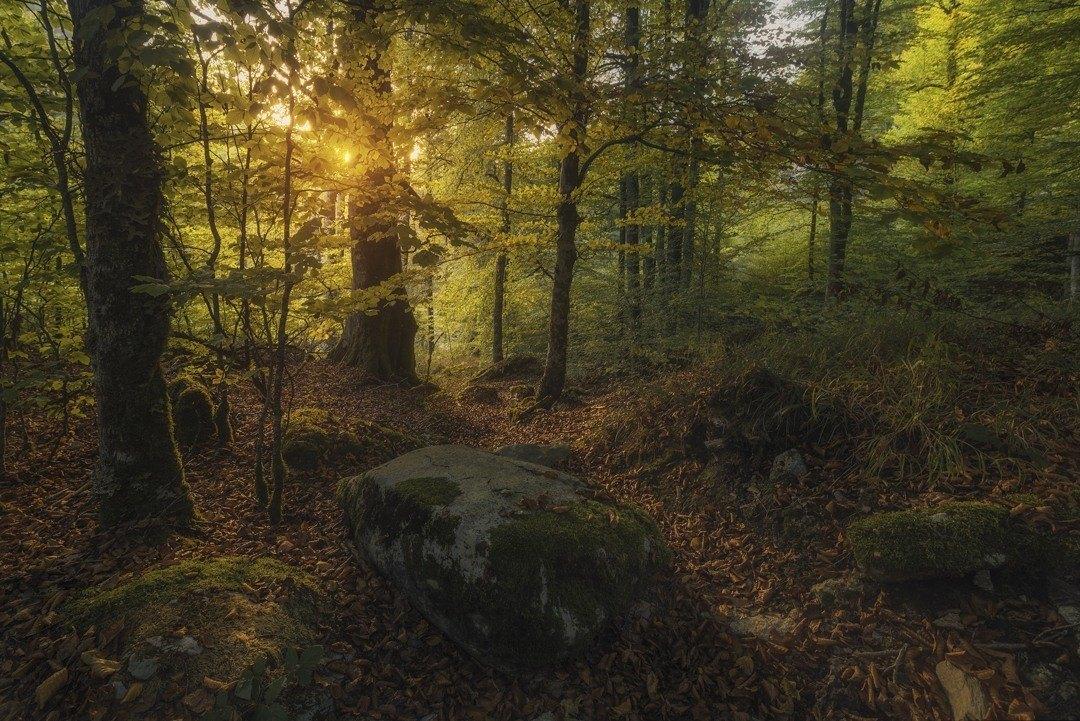 44 - MIKEL LARREA-IRATI FOREST-IRATI OIHANEAN