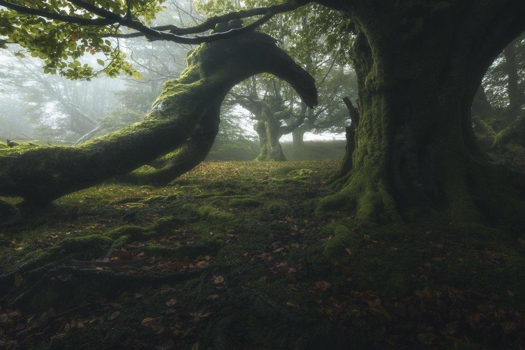 Criaturas-del-bosque-Juan_Manuel_Fernandez