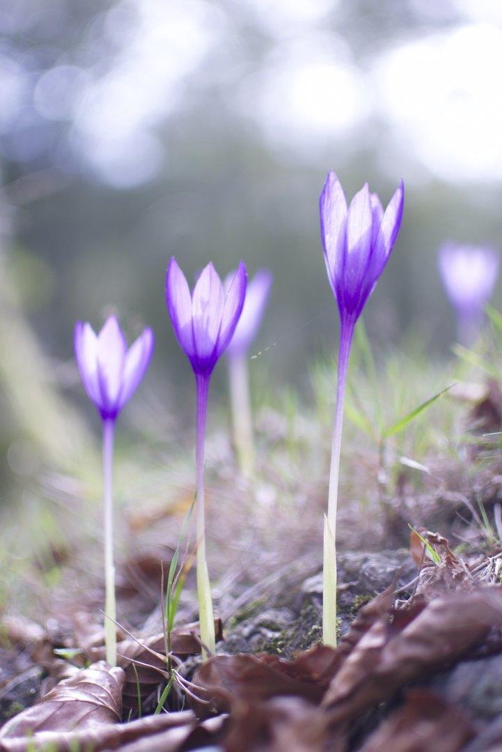 Gardentasuna-Aitor_Arruti
