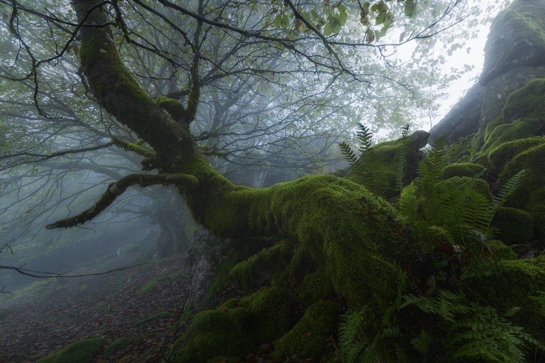 Green-enchantment-Mikel_Larrea