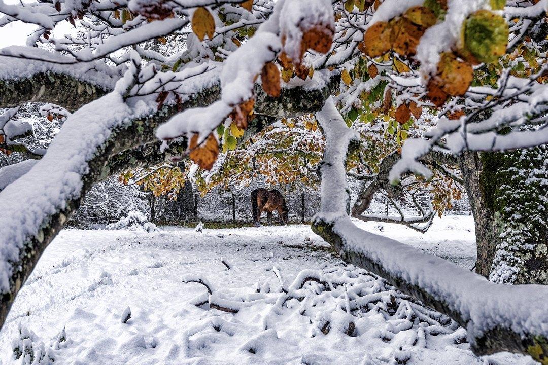 Otoño-nevado-2-Jose_Miguel_Romero