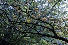 Basoko-forma-eta-koloreak-Koldo_Carrillo
