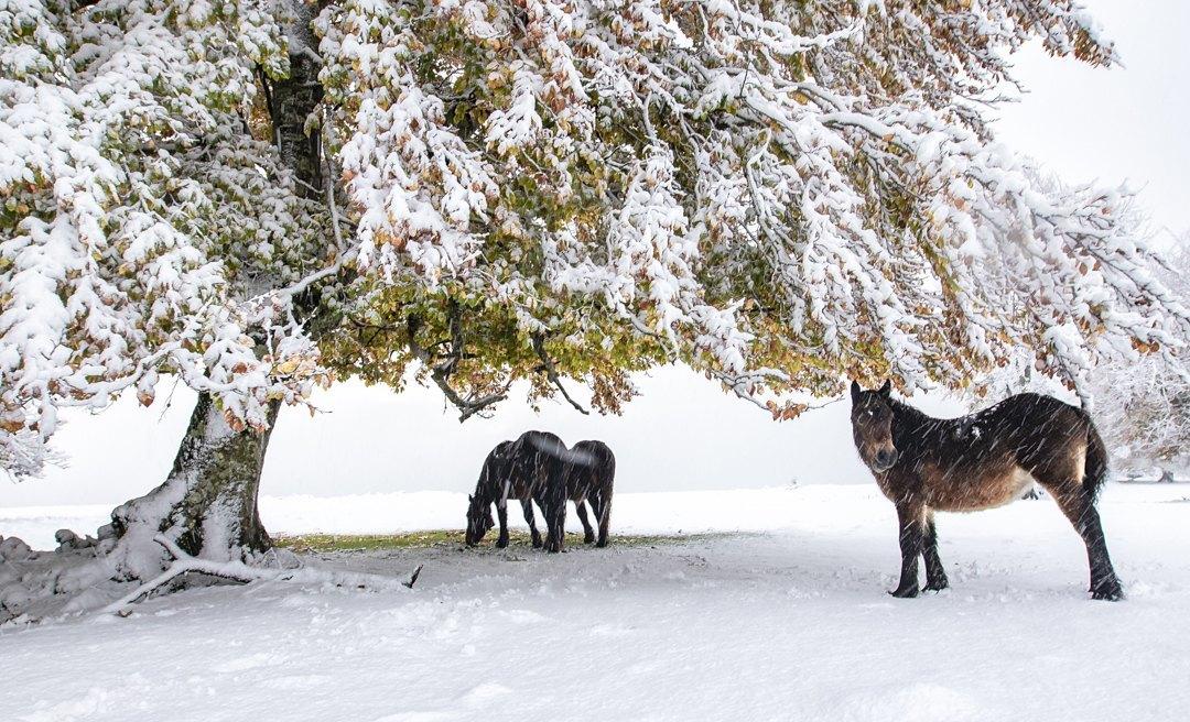 34-Caballos-en-la-nieve-Miguel_Cavero