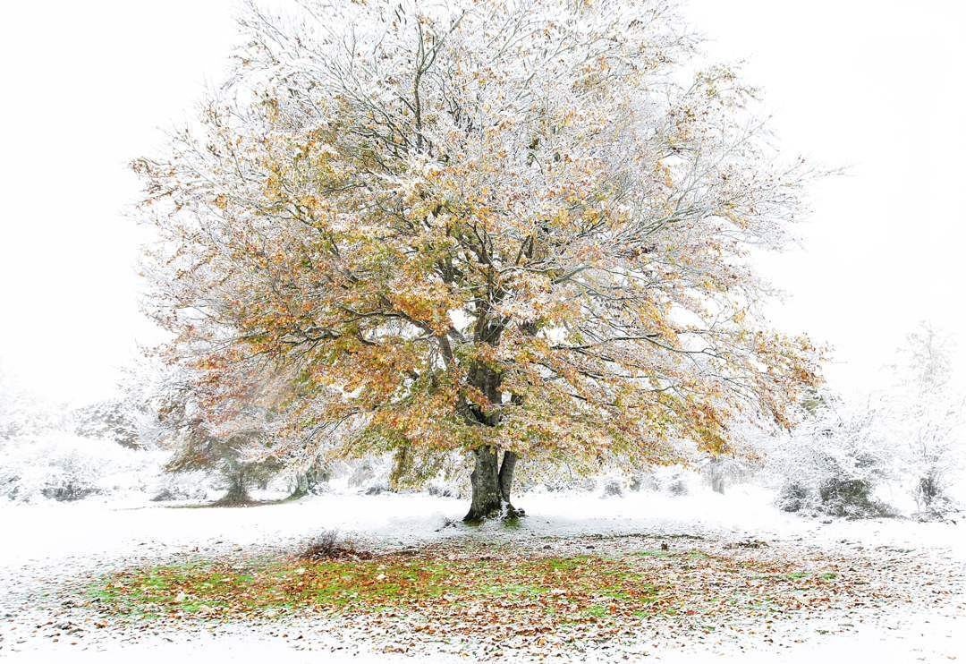36-Otoño-invernal-Miguel_Cavero