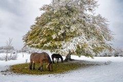 02-Otoño-nevado-3-Jose_Miguel_Romero