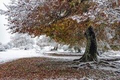 27-Otoño-nevado-1-Jose_Miguel_Romero