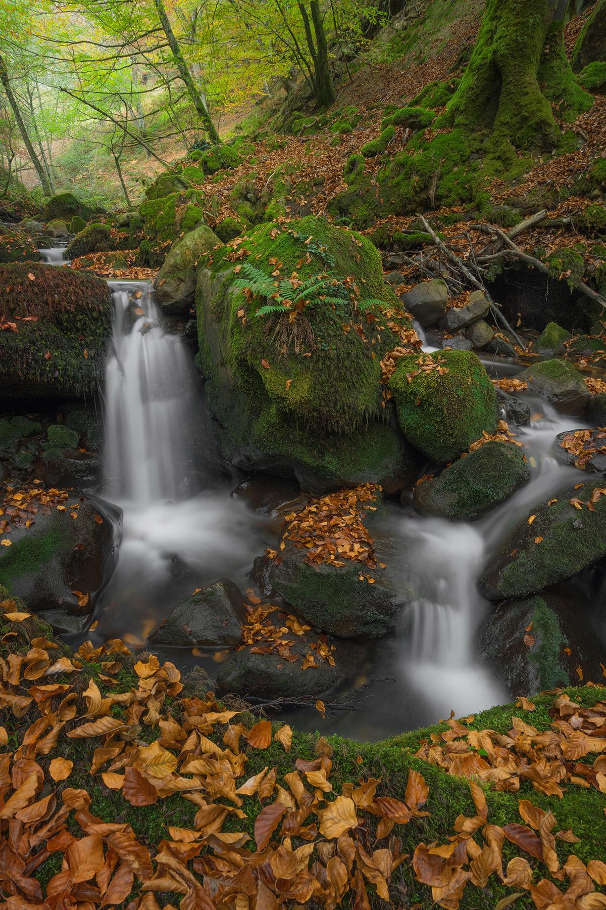 Anibal_Carmona-Autumn