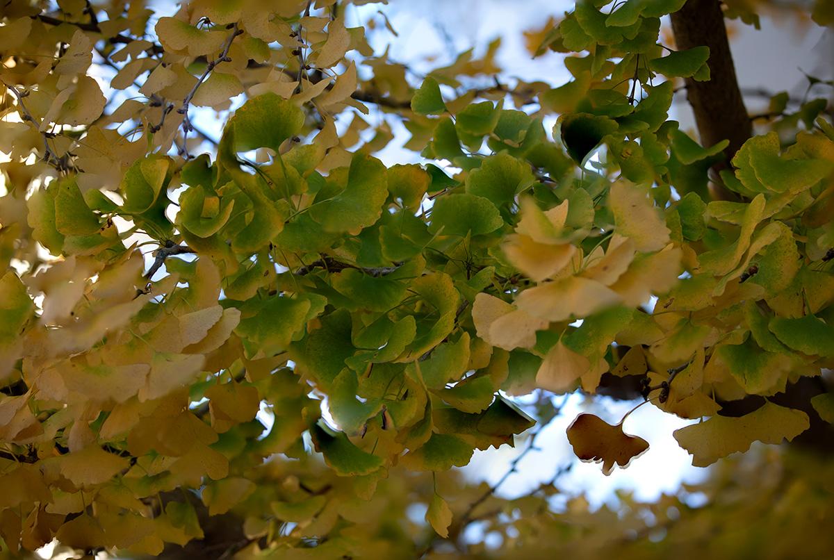 Antonio_Murillo-Udazkena-otoño