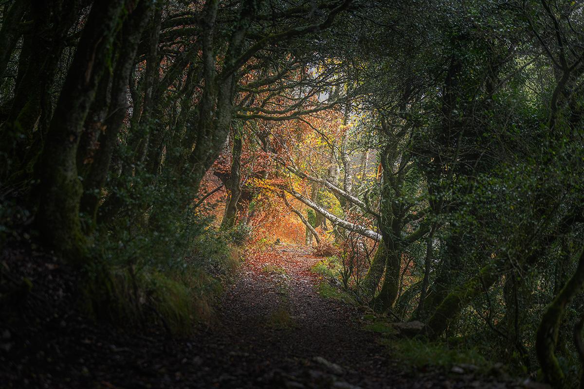 Mikel_Larrea-Natural_door_to_fall