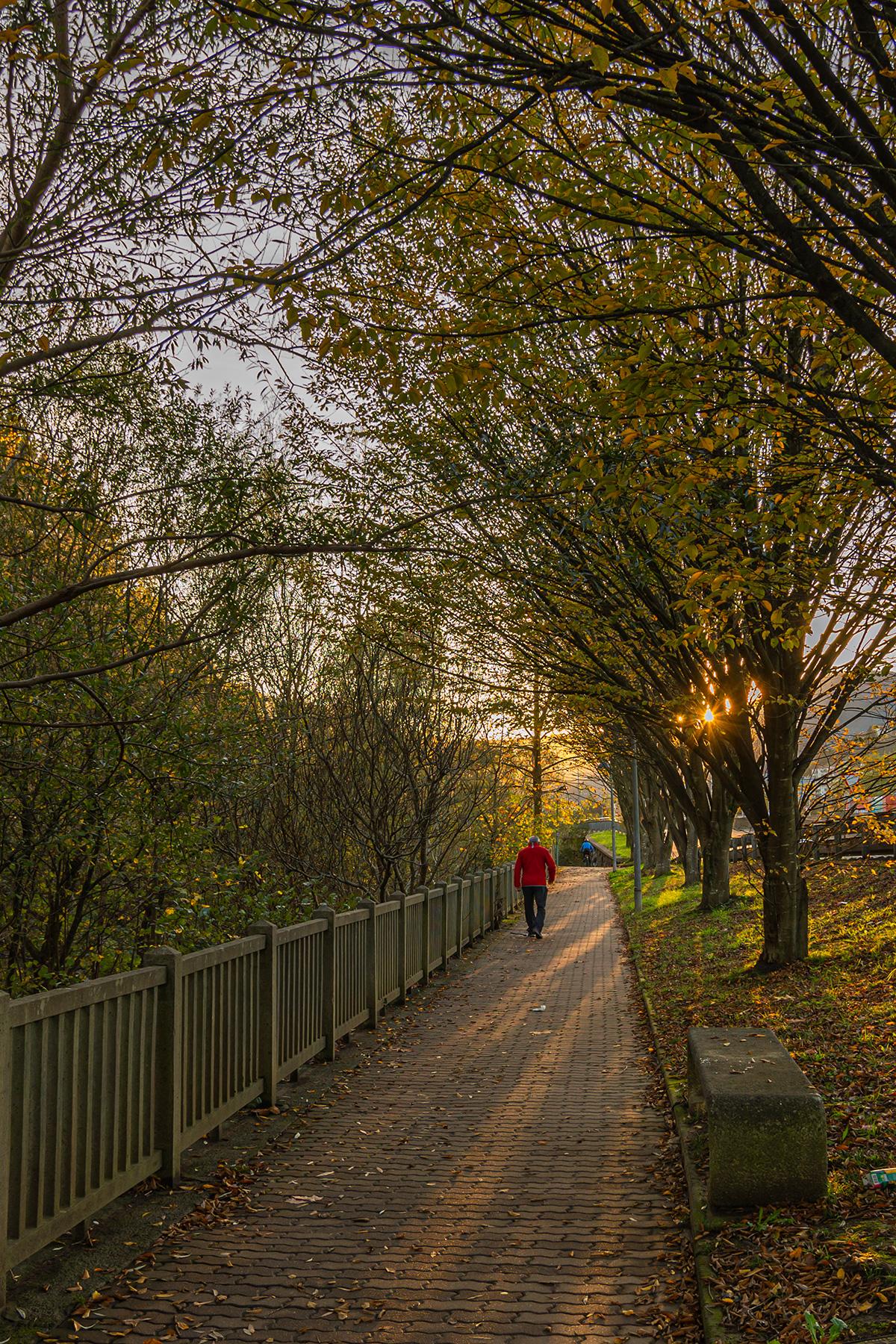 Sebas_Lozano-Paseo_de_otoño