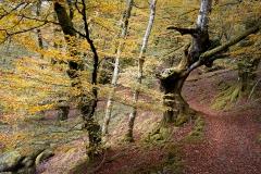 Jose_Luis_Ruiz-Colores_de_otoño