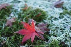 Oier_Larrañaga-No_frost