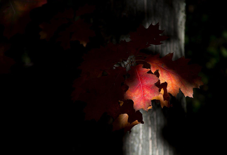 Rojos en Sombra / Antonio Baena