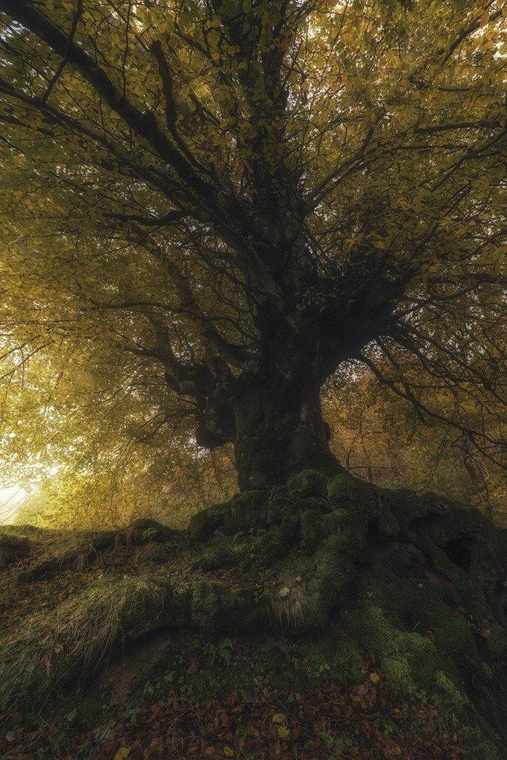 MIKEL LARREA-LONELY TREE-URKULU IBAIAREN ONDOAN, ORKATZATEGIRA BIDEAN